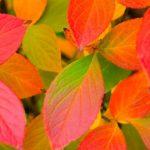 Herfst-achtergronden-herfst-wallpapers-13
